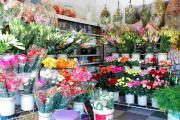 Chọn kệ bán hàng bày hoa trang trí dành cho những shop nhỏ